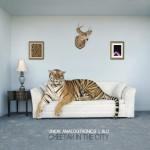 Blu & Union Analogtronics – Cheetah in the City (2016)
