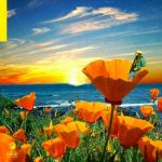 Rexx Life Raj – California Poppy 2 (2020)